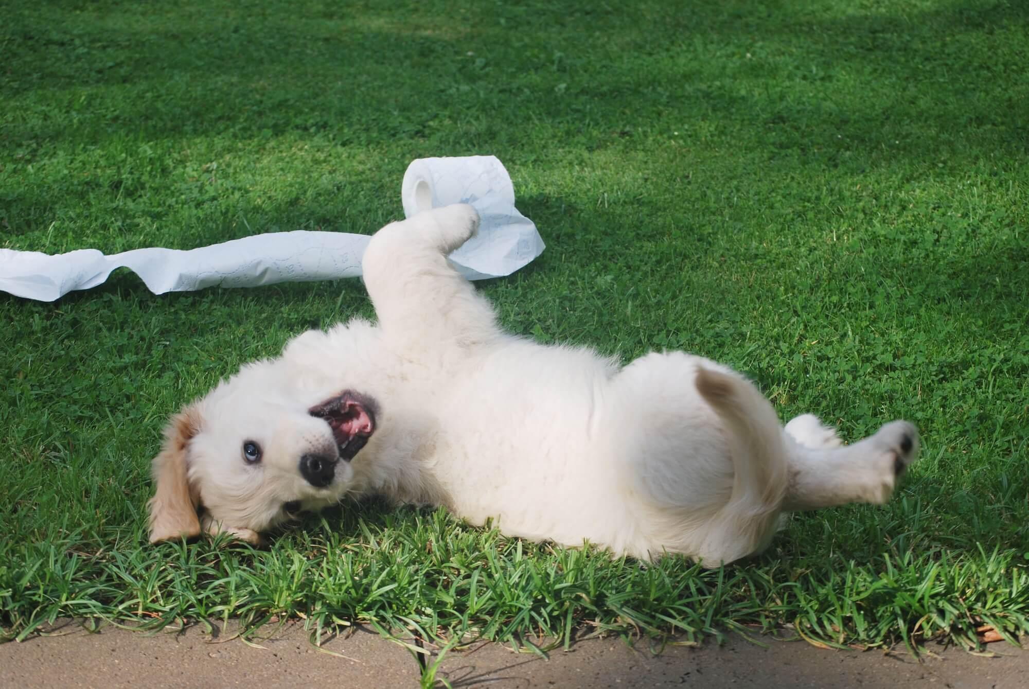 tissue-dog